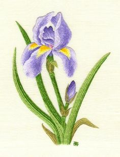 Iris Needle Painting Embroidery Kit - a Hand Embroidery Design as an Alternative to Cross-stitch.