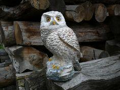 ručne maľovaná sova -sadrový odliatok