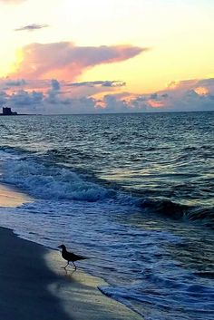 Panama City Beach Florida, Panama City Panama, Florida Beaches, Mountains, Nature, Travel, Naturaleza, Viajes, Destinations