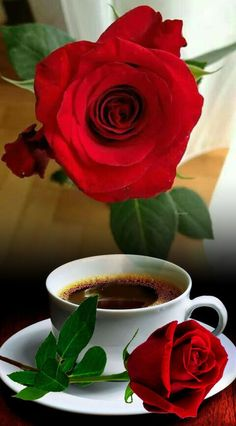 Photo effects combo by Tudora Stemate on Photo Lab Beautiful Flowers Images, Flower Images, Amazing Flowers, Beautiful Roses, Good Morning Coffee Gif, Good Morning Roses, Good Morning Flowers Pictures, Cool Pictures Of Nature, Coffee Love