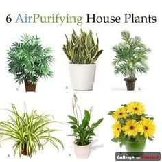 Air Purifying Plants