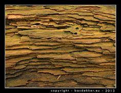 natuurfotografie - structuur van dode boomstam