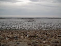 Low tide Southend, old path in to sea