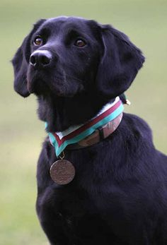 Inspiration for Finnegan - Bomb Detection Dog
