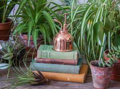 L'image contient peut-être: plante et plein air Your Favorite, My Favorite Things, Which One Are You, Plein Air, Mists, Diy, Canning, Color, Instagram