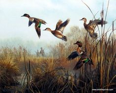 In Don Kloetzke's Greenwing Getaway a small flock of green-winged teal ducks have been startled by a couple of hunters, and are trying to fly out of the marsh.