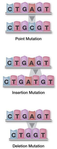 3 types of genetic mutations