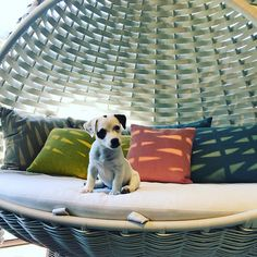 Today we had a visit from a new customer Zorro who loved our Dedon Swing rest Outdoor Living, Portugal, Rest, Puppies, Instagram, Design, Outdoor Life, Baby Dogs, Outdoor Camping