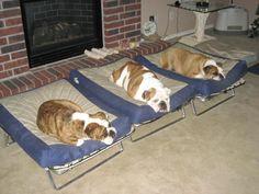 827 Best It's so plushy images | Doggies, Fluffy animals, Cut animals