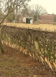 Laying hedges - glad to see it survived the winter so far Garden Hedges, Garden Fencing, Garden Landscaping, Cerca Natural, Homestead Farm, Living Fence, Love Garden, Garden Structures, Wild Life