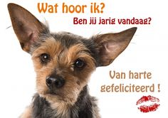 Grappige verjaardagskaart van hond met grote oren die heeft gehoord dat er…