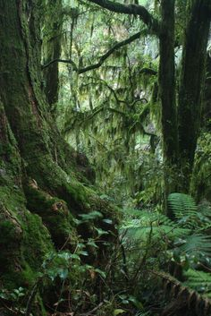 New England national Park, New South Wales, Australia