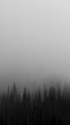 Black-and-White-Mist-Forests-Wallpaper