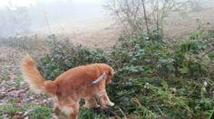 Wer morgens geht mit seinem Hund, bleibt tagsüber fit und auch gesund. ;-) Allerseits einen schönen 1. Advent.