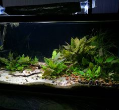 """445 Likes, 1 Comments - Planted_tanks (@planted_tanks) on Instagram: """"Pipefish tank"""""""