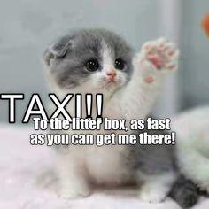 Taxi! http://cheezburger.com/9058472960