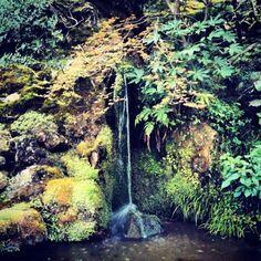 #Zen #Japanese #garden in #Ginkakuji #Silver #Temple #Kyoto #Japan #京都 #日本 #hecmnt