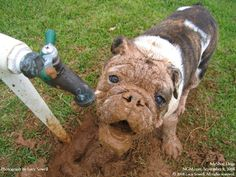you dirty dog you. Animals For Kids, Animals And Pets, Cute Animals, Funny Animal Pictures, Dog Pictures, Funny Pics, Funny Stuff, Dog Wallpaper, Wild Dogs