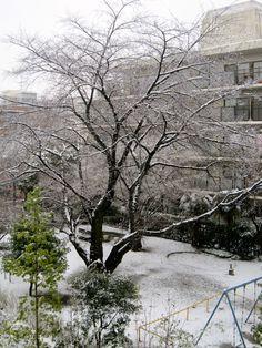 January snow. (Photo©C.S.Collins)