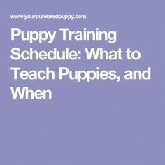 Pupy Training Treats - Pupy Training Treats - Eye Makeup - Puppy Training Schedule: What to Teach Puppies, and When - Ten Different Ways of Eye Makeup - How to train a puppy? - How to train a puppy? Puppy Potty Training Tips, Training Your Dog, Crate Training, Hockey Training, Training Collar, Running Training, Marathon Training, Stress, Easiest Dogs To Train