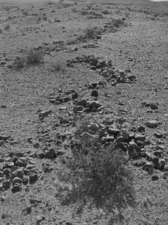 Another serpent effigy is found in southern California in the Mojave Desert. Like the serpent at Mt. Shasta, the serpent is swallowing an apparent egg that is a small rock Ancient Serpent Mounds In North America Nephilim Giants, Mound Builders, Archaeological Discoveries, Mojave Desert, Effigy, Ancient Civilizations, North America, 30th, Country Roads