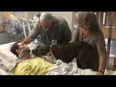 'Mollie vuole dire addio al suo padrone'. E l'ospedale dice sì. La scena è straziante – VIDEO - http://www.sostenitori.info/mollie-vuole-dire-addio-al-suo-padrone-lospedale-dice-si-la-scena-straziante-video/270451