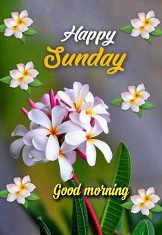 Good Morning Sunday Wallpaper, Happy Sunday Wallpaper, Happy Sunday Images, Good Morning Flowers Gif, Good Morning Sunday Images, Good Morning Happy Sunday, Good Morning Image Quotes, Good Morning Gif, Good Morning Picture