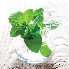 Herbs for Headaches. Dab peppermint essential oil at the temples to help ease a headache and more...