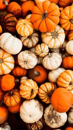 Pumpkin Farm, Pumpkin Spice, Fall Halloween, Spices, Vegetables, Food, Spice, Essen, Vegetable Recipes
