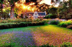 Vergelegen Estate in Somerset West, South Africa. Cape Town Tourism, South African Wine, Cape Dutch, Somerset West, In Vino Veritas, Garden Inspiration, Garden Ideas, Beautiful Places, Simply Beautiful