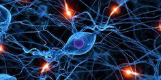 Д-р Бобан Пешиќ: Информодијагностика – докажан метод за решавање на многу…