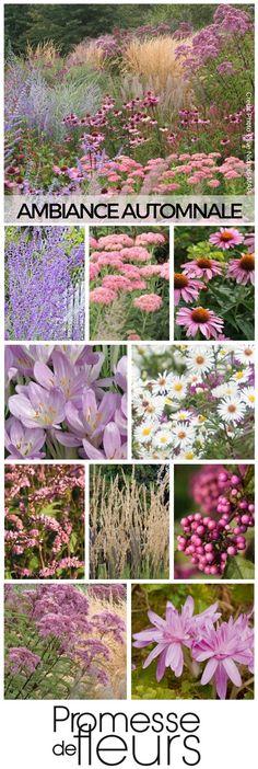 Massif de vivaces à floraison de fin d'été et d'automne. Retrouvez cette ambiance en détail sur le site Promesse de fleurs !