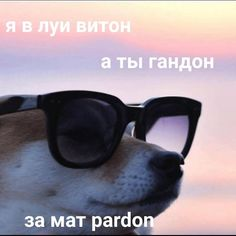 МЕМЧИК ^^ Green Things honda x blade green color Russian Quotes, Russian Memes, Hello Memes, Best Memes Ever, Some Beautiful Pictures, Dark Quotes, Meme Faces, Love Memes, Stupid Memes