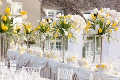 Yellow & white tulips...simply dramatic