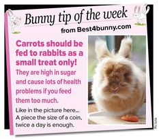 Bunny tip of the week... Carrots should be given as a small treat only