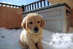 The Daily Cute: Celebrate National Puppy Day!