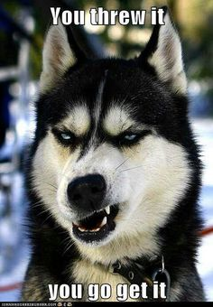 Image result for badass dogs