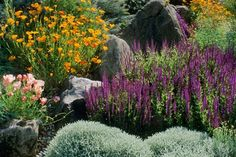Drought tolerant flowers - cottage garden. Sorts by size and colour
