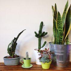 Quantas vezes você comprou um vaso de planta e ele foi murchando, murchando e morreu? Você não está sozinho no mundo, pois isso acontece com muito mais fre