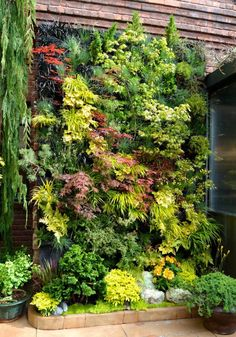 vertical garden beautiful. Japanese maples!