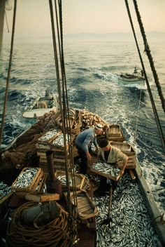 natgeofound:  Fishermen load their catch of sardines into crates on the Adriatic Sea, May 1970.Photograph by James P. Blair, National Geographic