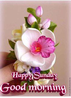 Sunday Wishes, Happy Sunday, Good Morning Flowers, Good Morning Images, Good Morning Friends Quotes, Italian Memes, I Love Heart, Blessed, Blessings