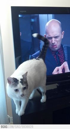 Paused the TV to move the cat, this happened. The longer you look the funnier it gets.