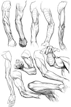 Super drawing reference hands arm anatomy ideas Super drawing reference hands arm anatomy ideas - -You can find Anatomy reference . Arm Drawing, Human Anatomy Drawing, Body Reference Drawing, Anatomy Reference, Art Reference Poses, Hand Reference, Body Drawing, How To Draw Anatomy, Male Figure Drawing