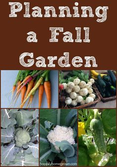 """I know what you're thinking, """"A fall garden? It's only July!"""" But now is exactly when you should be thinking about your fall garden. Here's what to plant in July and August so that you have harvests through the end of the year. Growing Winter Vegetables, Fall Vegetables, Growing Veggies, Growing Tomatoes, Gardening For Beginners, Gardening Tips, Container Gardening, Gardening Supplies, Garden Quotes"""