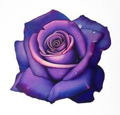 Great Cost-Free purple rose drawing Tips In this particular class, we can have a look at the way to attract any increased having pastels. Colorful Rose Tattoos, Purple Flower Tattoos, Blue Rose Tattoos, Rose Tattoo Cover Up, Rose Drawing Tattoo, Floral Tattoo Design, Flower Tattoo Designs, Purple Roses Wallpaper, Tatuagem Old Scholl