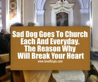 Dog attends church everyday waiting for his dead owner to come back to life. Thursday Pictures, Today Pictures, Quote Pictures, Morning Pictures, Gif Pictures, Horse Pictures, Picture Quotes, Cute Good Morning Quotes, Happy Morning Quotes