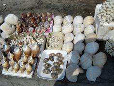 #magiaswiat #aleksandria #egipt #podróż #zwiedzanie #afryka #blog #miasto #amfiteatr #biblioteka #pałac #montaza #ogrody #cytadela #morze Stuffed Mushrooms, Sugar, Cookies, Vegetables, Desserts, Blog, Stuff Mushrooms, Crack Crackers, Tailgate Desserts