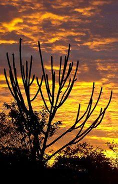 Por do sol no sertão, Brazil