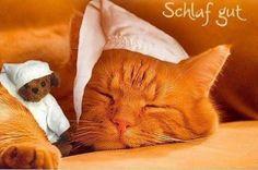 Wünsche all meinen FB Freunden auch eine Gute Nacht und süße Träume - http://guten-abend-bilder.de/wuensche-all-meinen-fb-freunden-auch-eine-gute-nacht-und-suesse-traeume-173/